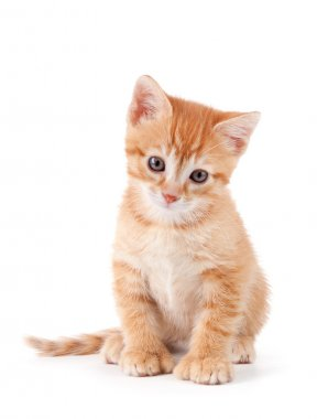 Cute orange kitten with large paws.