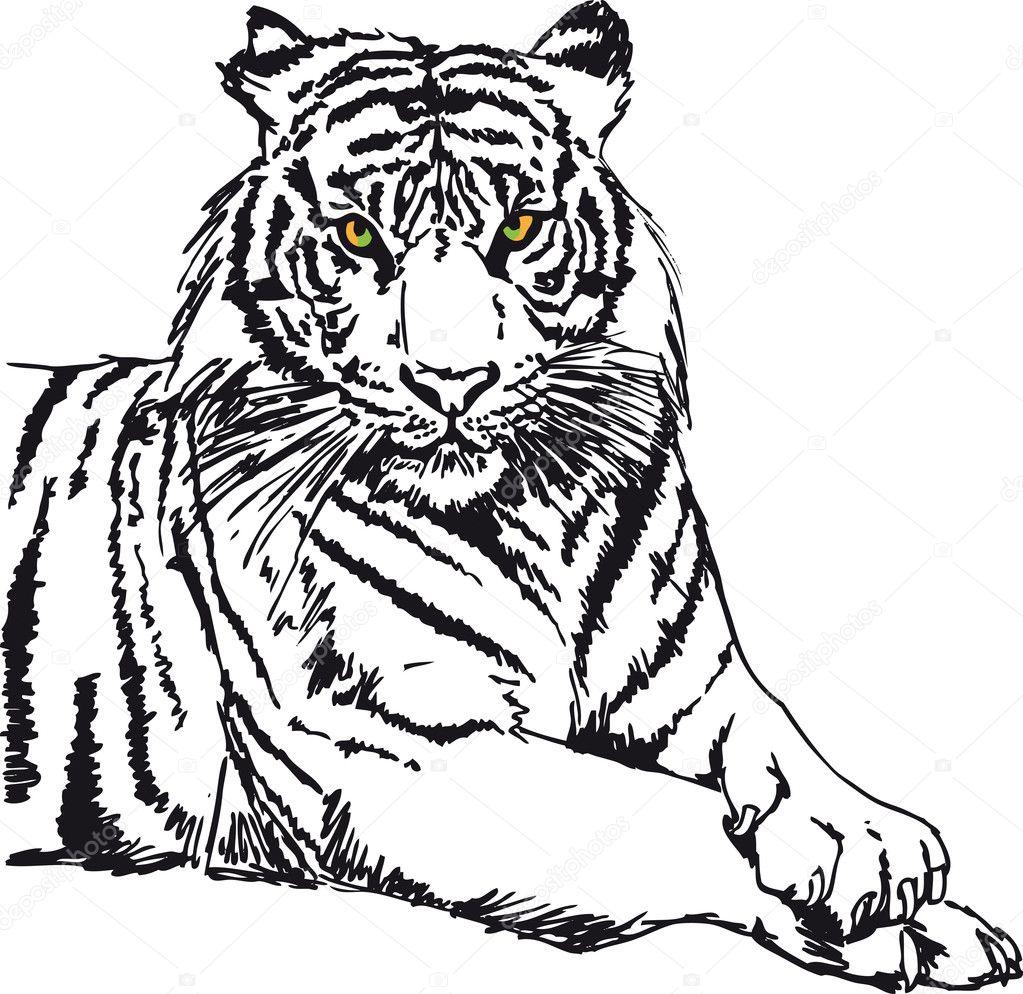 schets witte tijger vectorillustratie stockvector