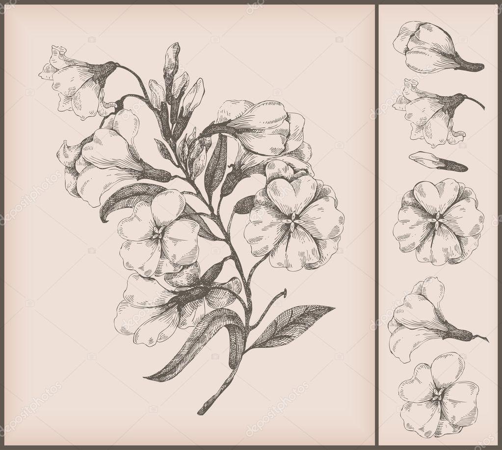 Vintage flower drawing