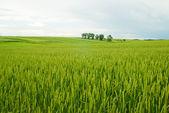 Fotografie Rural landscape of Poland.
