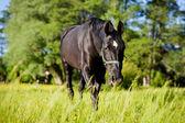 Ló körül gyepek, Lengyelország