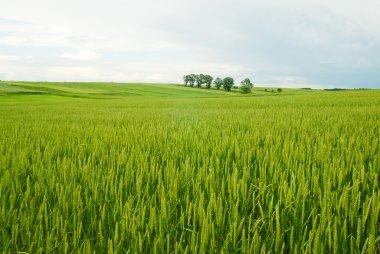 Rural landscape of Poland.