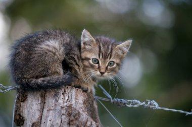 Kitten on wood
