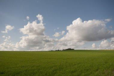 Panoramic field view