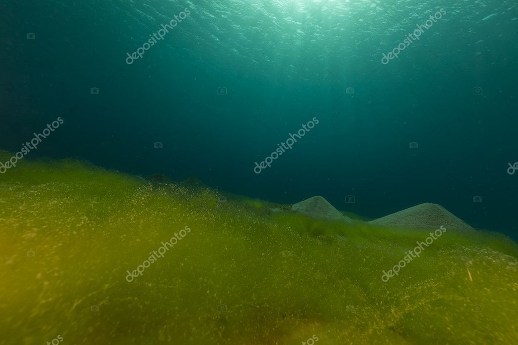 Blue ocean, sandy bottom and algae in the Red Sea.