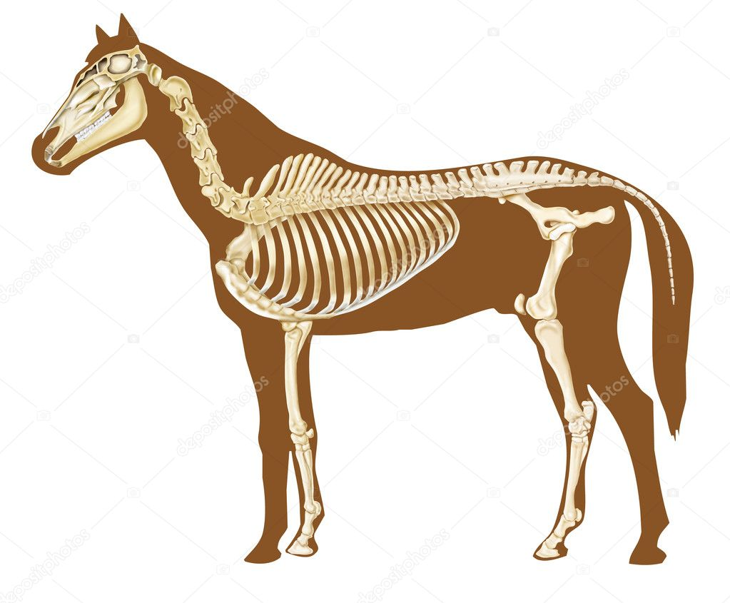 esqueleto de caballo — Foto de stock © alexonline #10716926