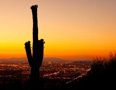 Sunset on Phoenix With Saguaro Cactus