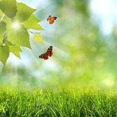 Letní čas. abstraktní optimistické pozadí s létajícími butterf