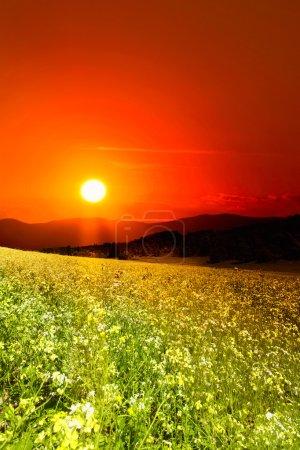 Sunset over the green summer hills