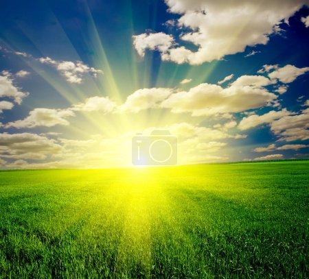 Photo pour Herbe verte sous le ciel bleu - image libre de droit