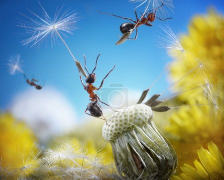 Photo for Ants flying away with crafty umbrellas - seeds of dandelion, ant tales - Royalty Free Image