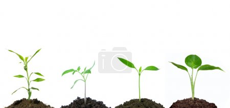 Photo for Little green plant on white background - Royalty Free Image