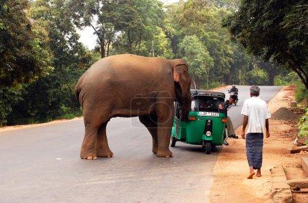 Attaque de l'éléphant sauvage