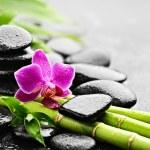 Zen basalt stones and orchid with dew...