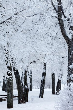 Photo pour Parc d'hiver dans la neige - image libre de droit