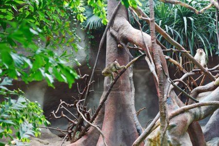 Photo pour Singe au zoo - image libre de droit
