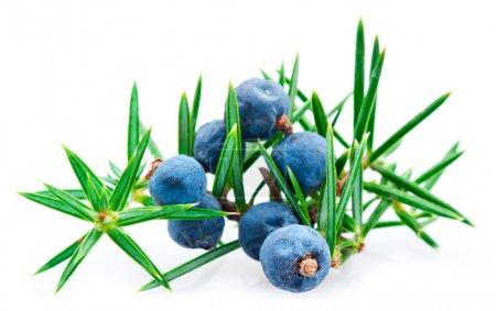Juniper berry isolated over white background macro...