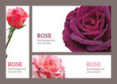 Template invitation cards with roses