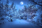 Moonlight night in winter wood