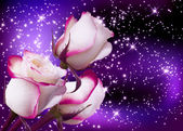 """Постер, картина, фотообои """"Розы и звезды"""""""