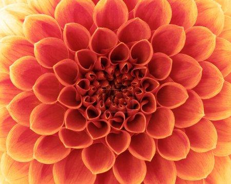 Photo pour Fleur abstraite et beaux pétales - image libre de droit