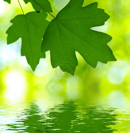 Photo for Green leaves over abstract background - Royalty Free Image