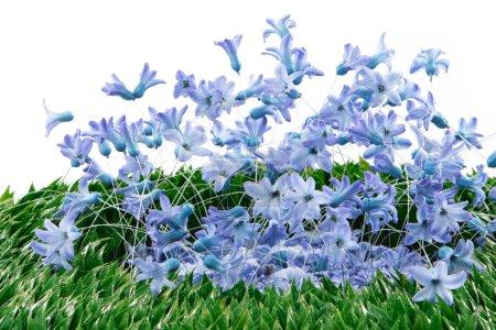 Photo pour Décoration de fleurs de printemps bleu - image libre de droit