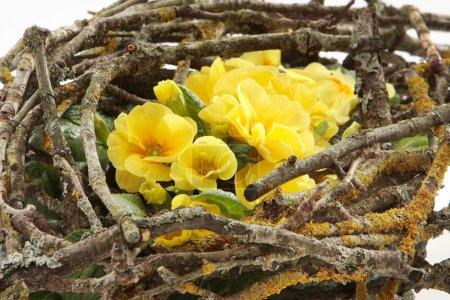 Photo pour Nid de fleurs - image libre de droit