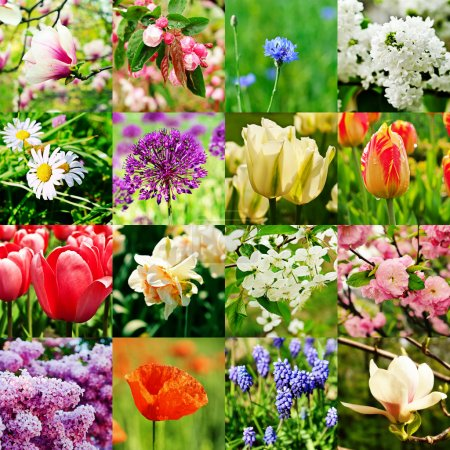 Photo for Collage from different kind of spring flowers - Royalty Free Image