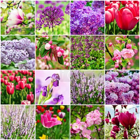 Photo for Collage from different kind of violet flowers - Royalty Free Image