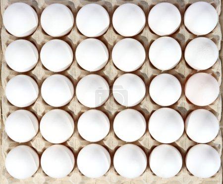 Photo pour Oeufs dans l'emballage sur le fond blanc. (isolé) - image libre de droit
