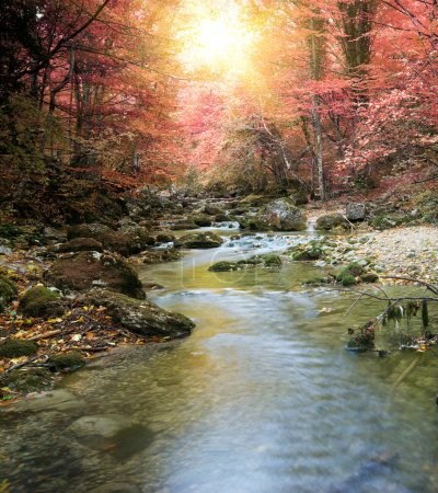 River in autumn forest. Nature composition....