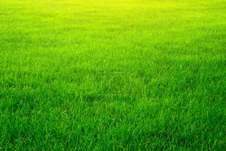 Photo for Green grass background texture. Element of design. - Royalty Free Image