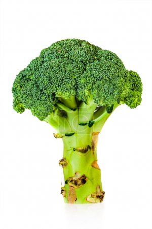 Broccoli (Brassica silvestris)