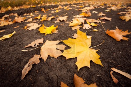 Photo for Fallen leaves on the ground - Royalty Free Image