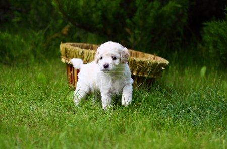 Close Up playful puppy outdoors