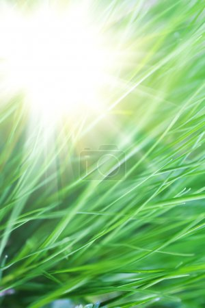 Photo for An image of lush thick green grass close-up - Royalty Free Image
