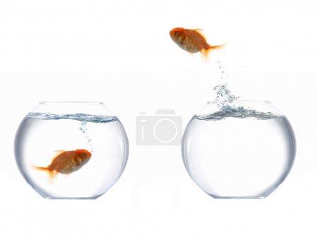 Foto de Una imagen de un pez saltando del agua - Imagen libre de derechos