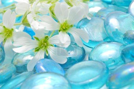 Photo pour Un gros plan tiré de délicates fleurs blanches sur les pierres de verre bleu - image libre de droit
