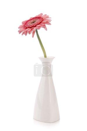Pink gerbera in vase on white background