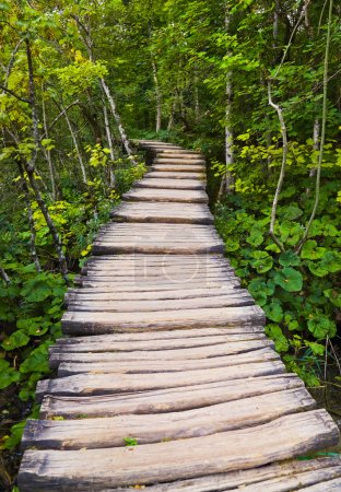Photo for Pathway in Plitvice lakes park at Croatia - travel background - Royalty Free Image