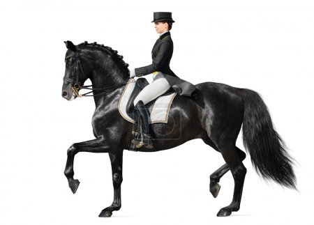 Photo for Equestrian sport - dressage (isolated on white) - Royalty Free Image