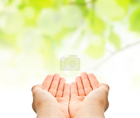 Child hands hold over green leaves background