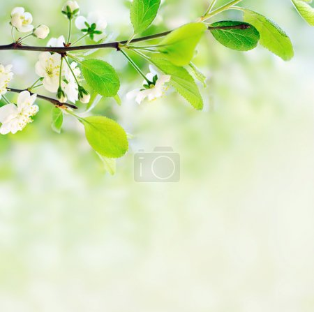 Photo for White spring flowers on a tree branch over green bokeh background close-up shallow DOF - Royalty Free Image