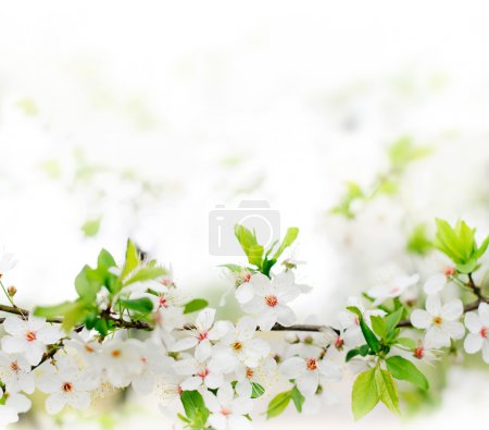 White spring flowers on a tree branch
