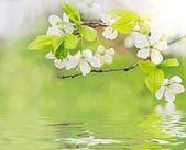 Spring flowers on water waves