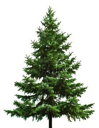 Photo pour L'arbre de Noël nu prêt à décorer - image libre de droit