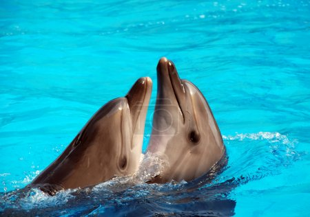 Photo for Dolphin's dancing - Royalty Free Image