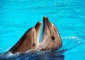 """Постер, картина, фотообои """"Танцы дельфинов"""""""