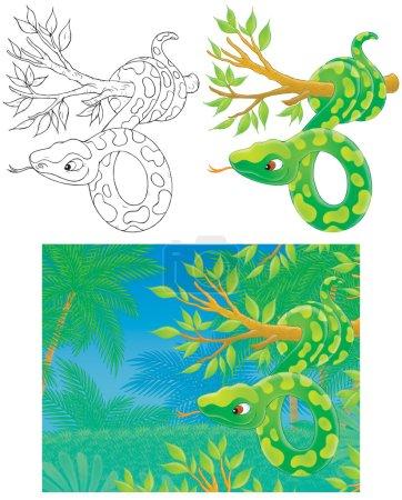 Foto de Imágenes Prediseñadas ilustraciones de una gran boa verde colgando de la rama de un árbol en la selva, dibujos a color y en blanco y negro contorno para una página para colorear, sobre un fondo blanco - Imagen libre de derechos